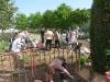 pflanzfest-2011-044